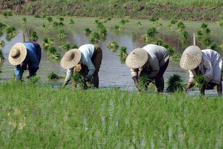 เยียวยาเกษตรกร
