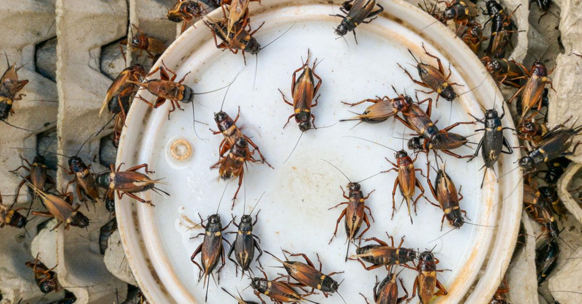 อาหารจากแมลง