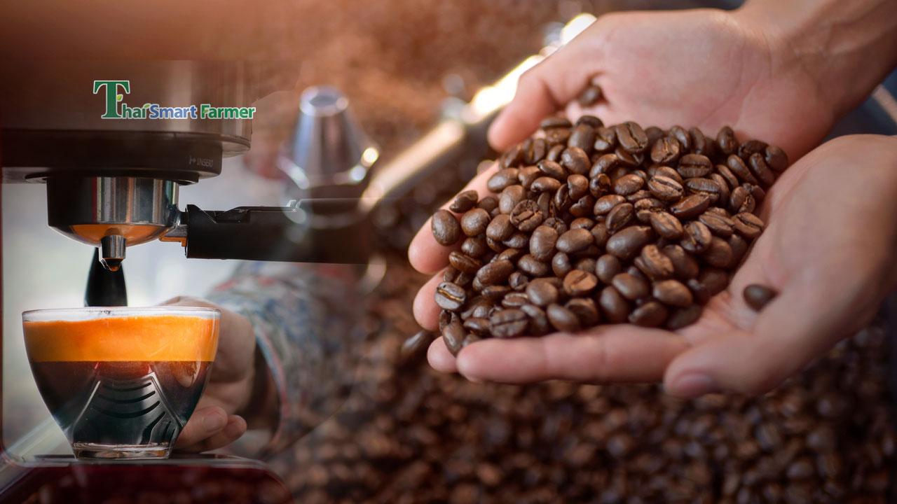 สุดยอดกาแฟพันธุ์ไทย